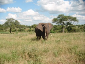 Earth Day Post – Tanzania's National Parks