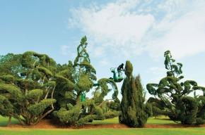 Pearl Fryar TopiaryGarden